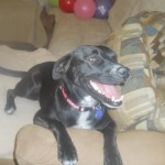 Ebony's furever home