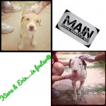 Keira and Erin, Mother and Daughter with Mange-update