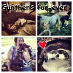 Gunther's fur-ever!