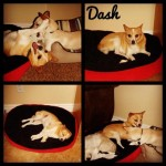 Dash and his pals
