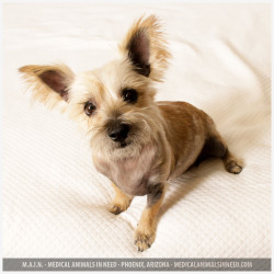Shirley, Cairn Terrier Mix