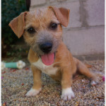 Meike, Terrier Mix Puppy