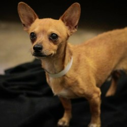 Emilio, Chihuahua