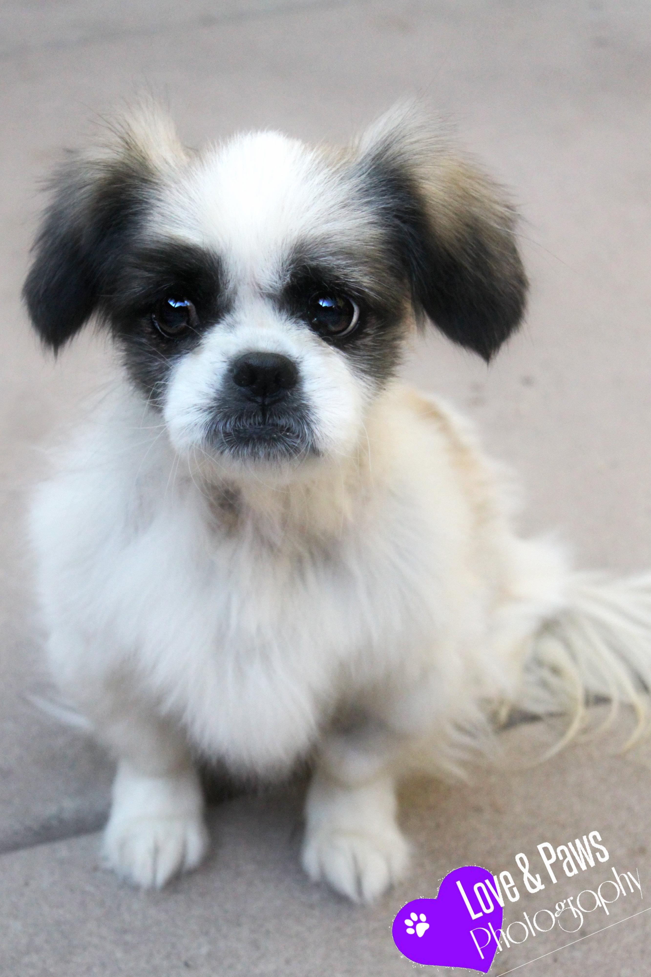 in need dog rescue in phoenix arizona saving sick and