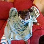 Pixie, Boxer