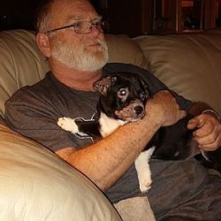 Winnie, Border Collie Puppy