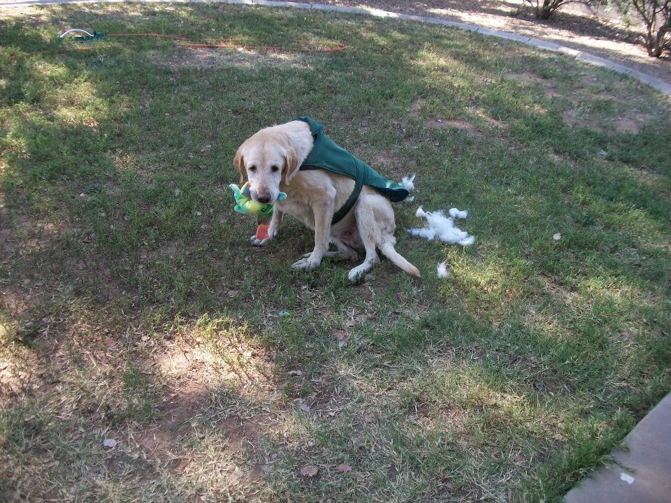 look who got busted chewing up toys this morning – Emma
