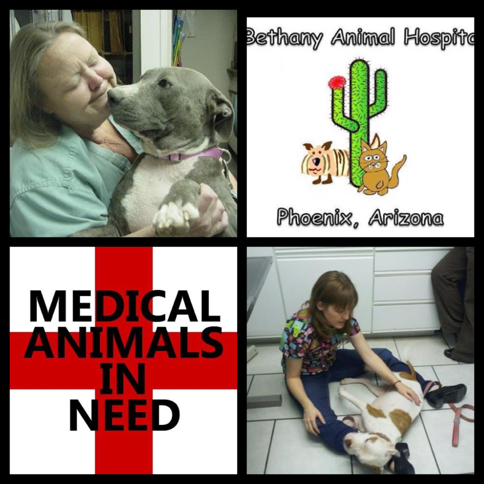 Dr. Katie Andre and Dr. Melissa Miller at Bethany Animal Hospital (BAH).