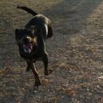 Happy MAIN dog