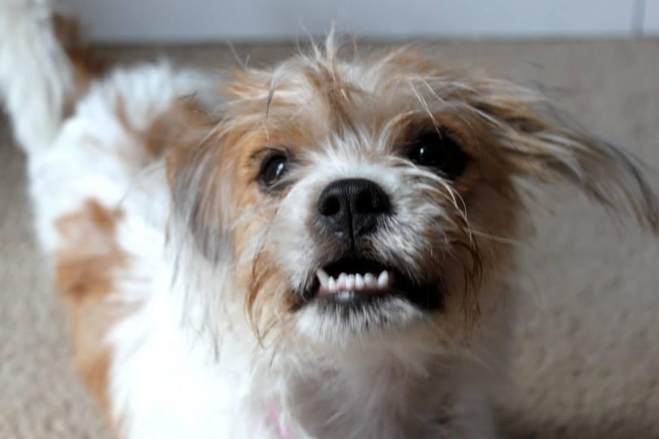 Dog Rescue Ohoenix