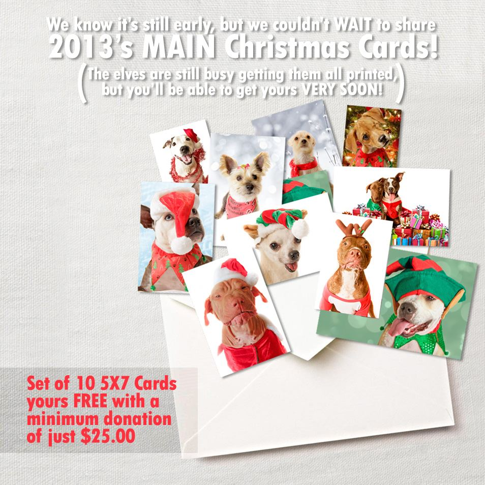 M.A.I.N. Christmas Cards | M.A.I.N. - Medical Animals In Need, Dog ...