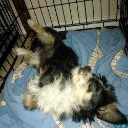 Bella, safe in foster