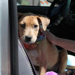 Willow's freedom ride!