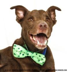 Kathleen's foster dog, Flaco
