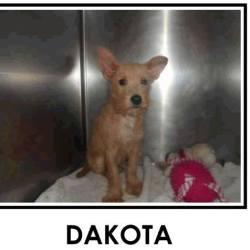 Dakota waiting for rescue