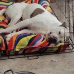 Georgie relaxing in foster