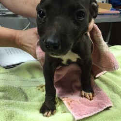 Harlee at rescue