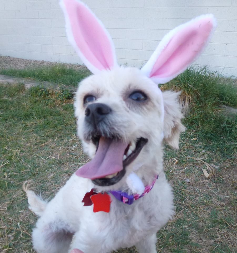 bunny 2016 easter 4k - photo #19